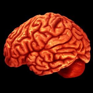 wiwisekcja mozg