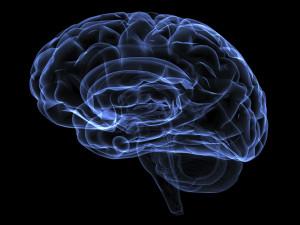 Płytki umysł