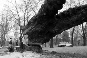 architekci-krajobrazu-czyli-rzeznicy-drzew