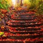 Jesień krok po kroku