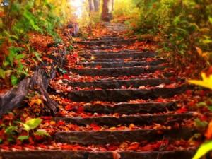 jesien-krok-po-kroku