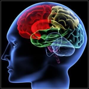 Życie naszego mózgu