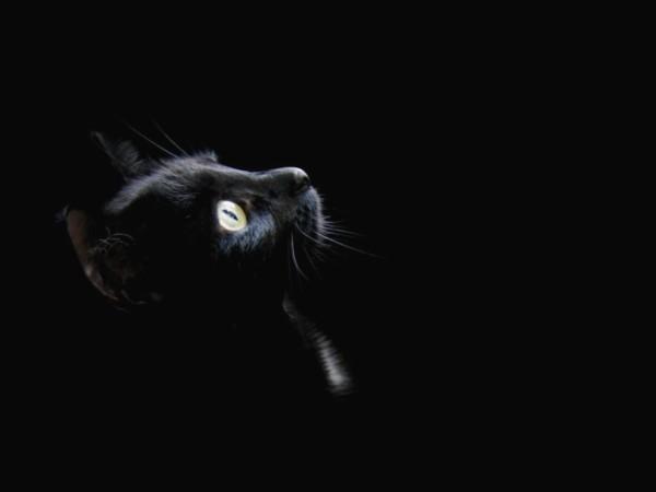 Koty leczą choroby to dar