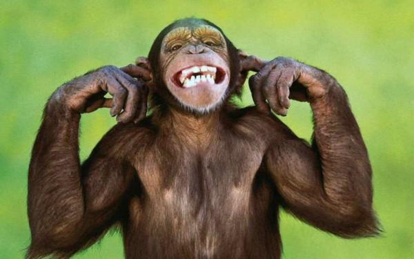 Małpy uciekły z wrzaskiem