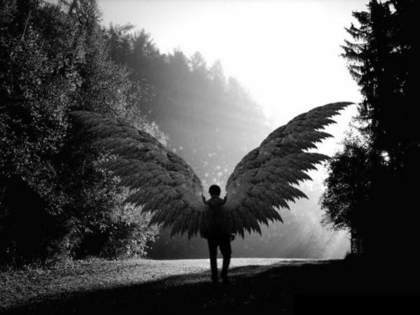Musisz mieć skrzydła u ramion
