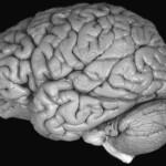Mózg czyli zrozumienie niezrozumiałego