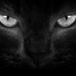 Przebiegł drogę kot, nie był czarny