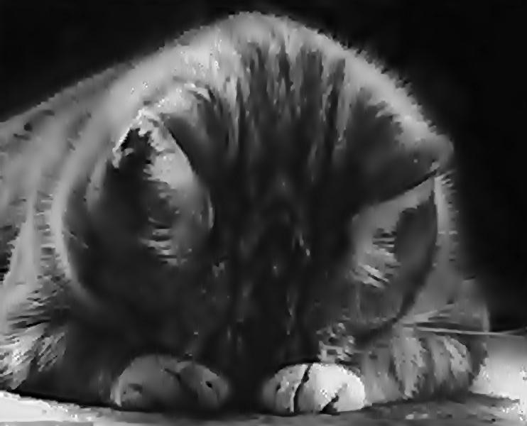 Dzięki Ci Boże Za Koty Grzegorz Kempinsky Blog Grzegorz