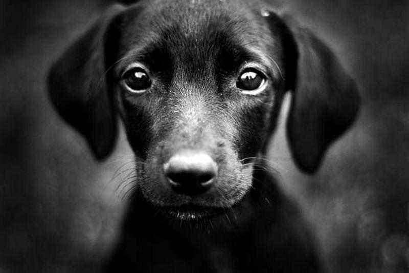 Psy Rozpoznają Złych Ludzi Grzegorz Kempinsky Blog Grzegorz