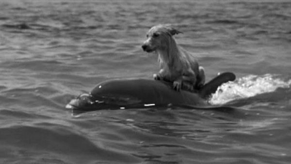 Delfiny uratowały psa