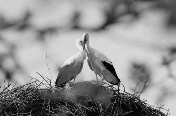 Miłość nie zna odległości