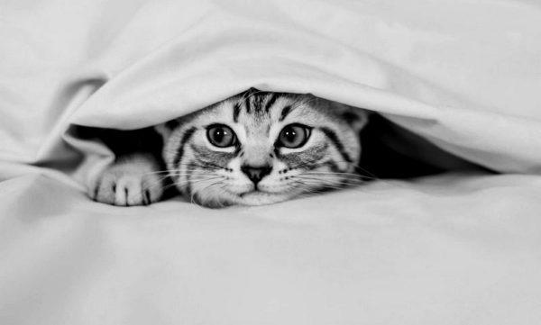 Kot który śpi w łóżku