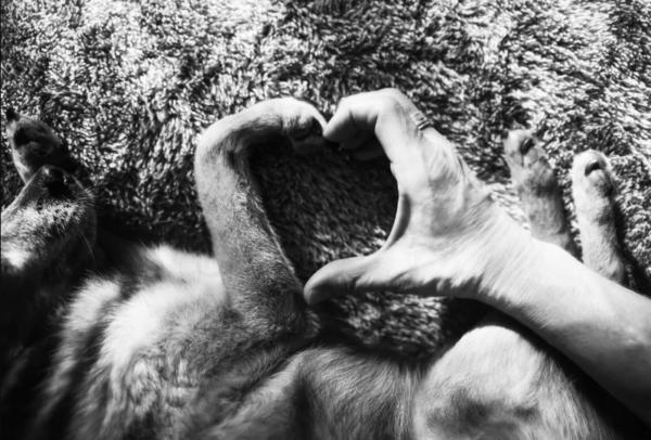 O śmierci zwierząt naszych