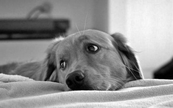 Psy ratują ludzi przed rakiem