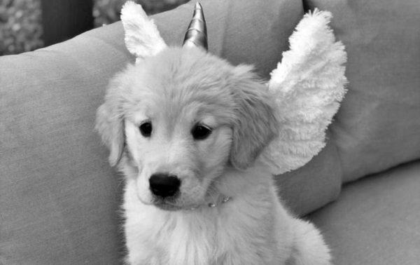 Anioły w przebraniu futrzaków