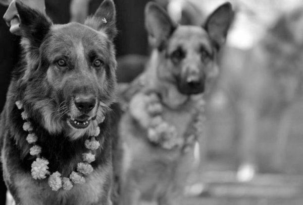 Festiwal, który dziękuje psom