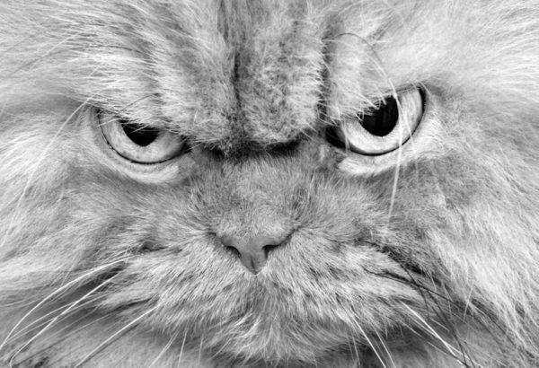 Dlaczego nie warto mieć kota