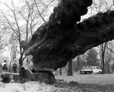 Architekci krajobrazu, czyli rzeźnicy drzew