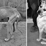 Bezdomne psy zmieniają się nie do poznania