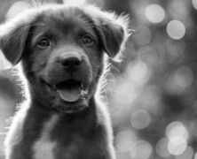 Cztery powody dla których warto mieć psa