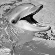Delfiny dostały osobowość