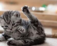 Kot w domu to zdrowie