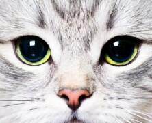 Koty potrafią leczyć ludzi