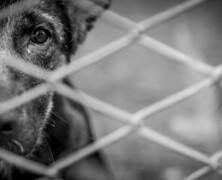 Lekcje człowieczeństwa od psa