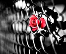 Miłość w KL Auschwitz