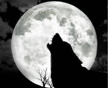 Nocy nie ma i smutku nie ma
