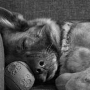O nocy listopadowej. Psim sercu i Nadziei.