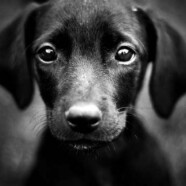 Psy rozpoznają złych ludzi