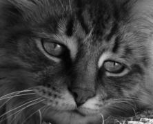 Spotkanie z kotem na obcej ziemi