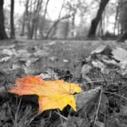Wrzesień w październiku