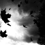 Wypłakało już wszystkie liście