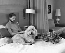 Zamieszkaj w hotelu z psem ze schroniska