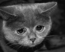 Zwierzęta są świadome cierpienia